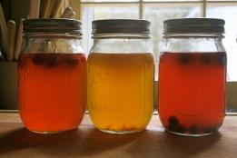 Beautiful jars of Kombucha (photo courtesy of farmhousekitchen.wordpress.com)